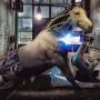 horse_atorres_DPB